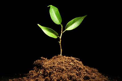 Greenprint : la conscience environnementale, de la parole... aux actes