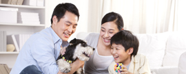The growth path of pet food