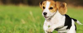 El 69% de los hogares tiene al menos un perro o gato