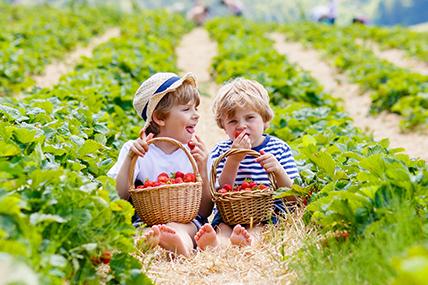 Fruits & légumes : les familles, cible à enjeu ?