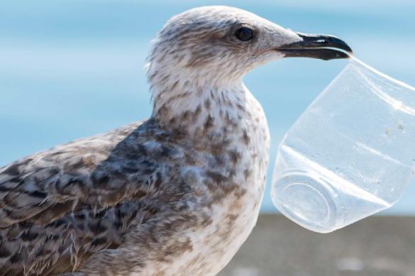¿Que piensan los peruanos sobre el uso de plásticos?