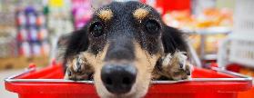 Casi la Mitad de hogares peruanos tienen una mascota