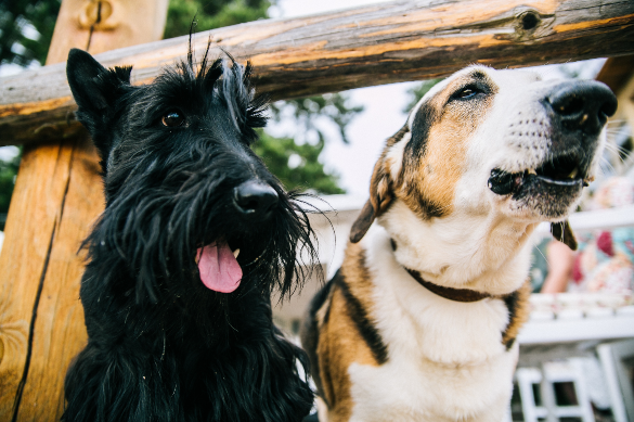 Pet Care: Um universo de extremos