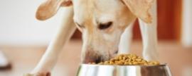 Crise bate na porta do mercado Pet